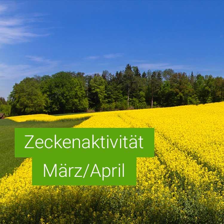 Vorschaubild: Zeckenaktivität im März / April