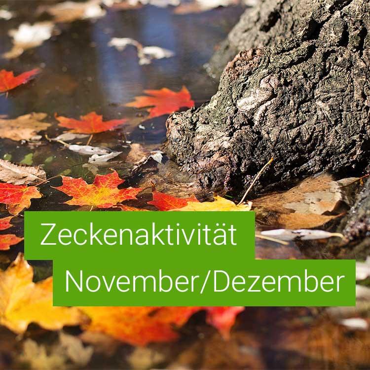 Vorschaubild: Zeckenaktivität im November / Dezember