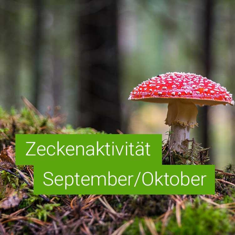 Vorschaubild: Zeckenaktivität im September / Oktober