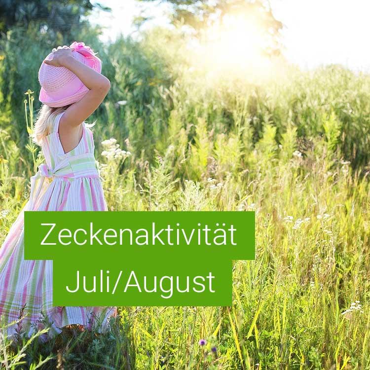 Vorschaubild: Zeckenaktivität im Juli / August