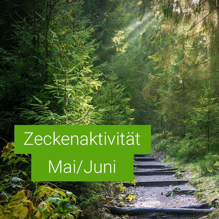 Vorschaubild: Zeckenaktivität im Mai / Juni