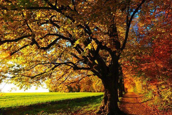 Baum-Waldrand
