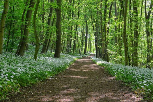 Gruen-Waldweg