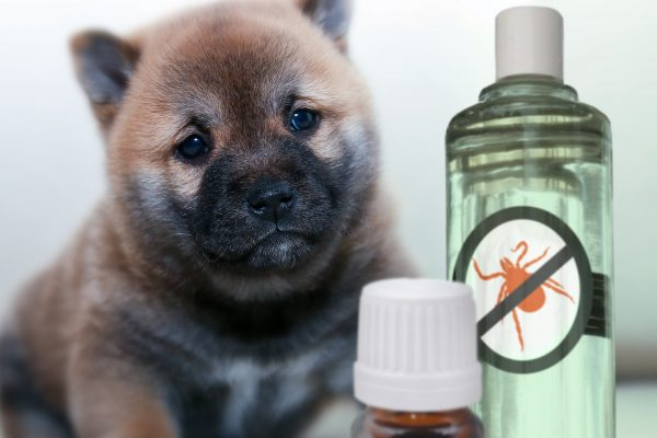 Repellents können helfen Zecken abzuwehren