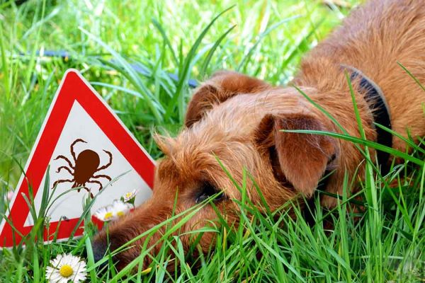 Hund-Wiese-Zeckenschild