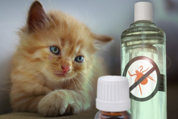 Katze-Repellents