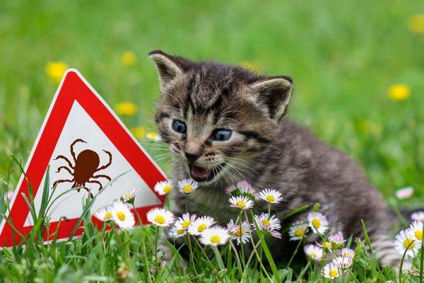 Katze mit Zeckenwarnschild auf Wiese