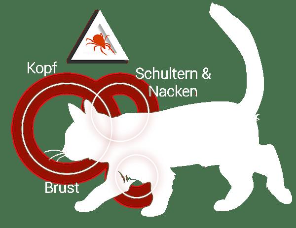 Grafik: Wo werden Katzen von Zecken gestochen?